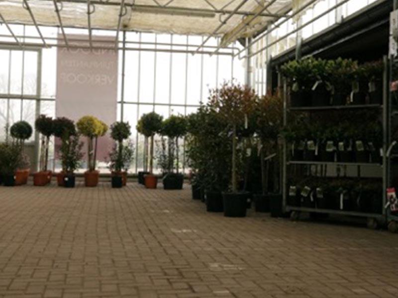 Indoor verkoop tuinplanten