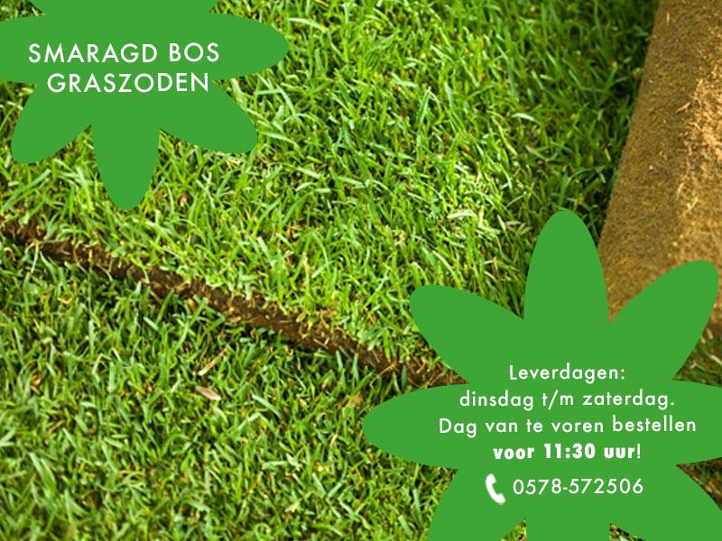 Smaragd graszoden van Bos