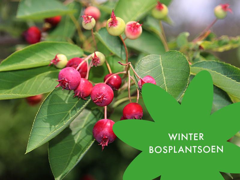Van Heesters Tot Loofhout. De Winter In Aantocht